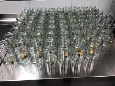 Die Aufgereihten Gläser ...